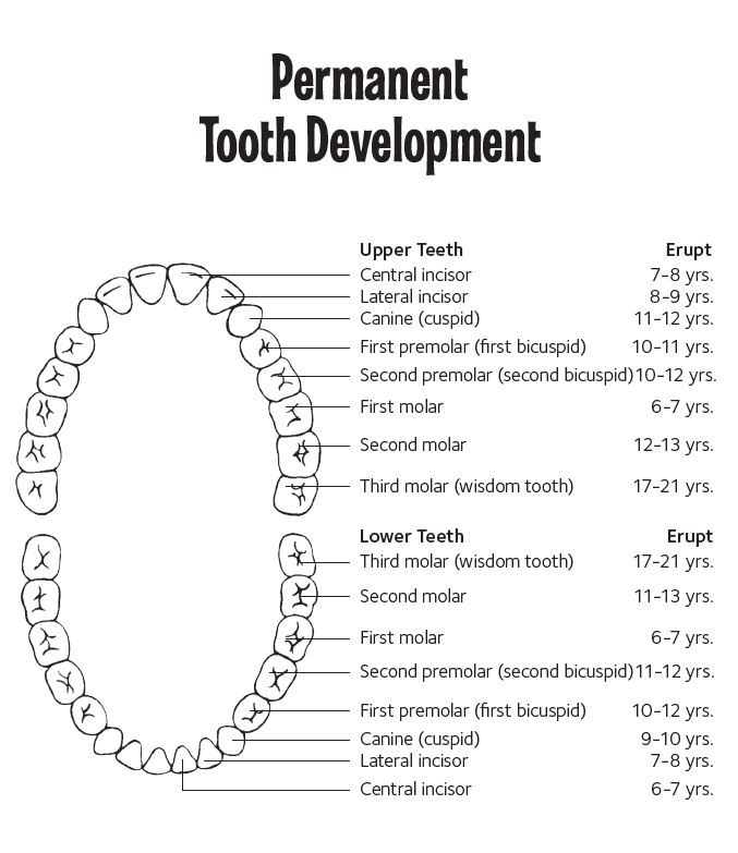Remember This Is Just A General Guideline Some Kids Lose Teeth Before Or After The Years Indicated Above And While Your Job To Ist Tooth Fairy